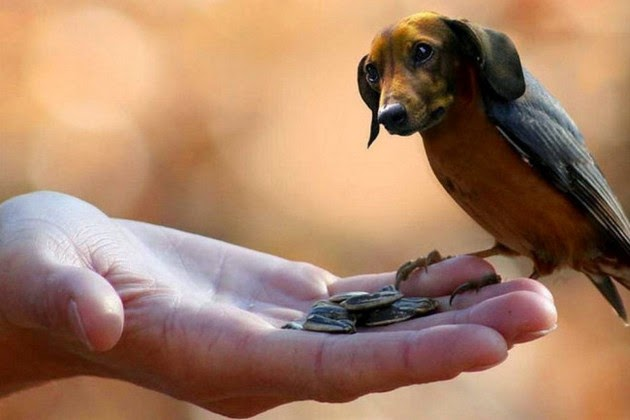 dogs-and-birds-1