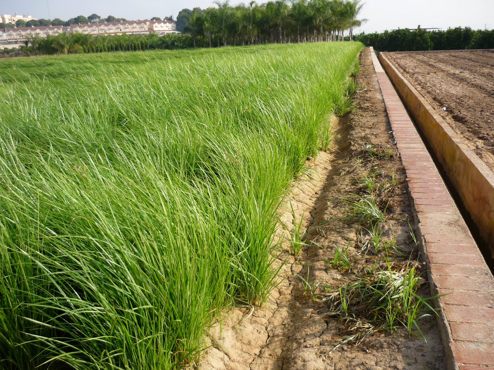 Crea tu jard n la agricultura ecol gica contra el cambio for Crea tu jardin
