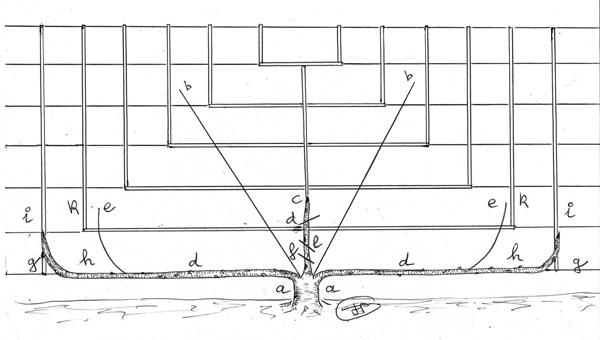 Les secrets de la taille et de la greffe des arbres for La taille de l abricotier