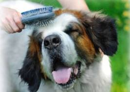 Keeping a Clean Dog