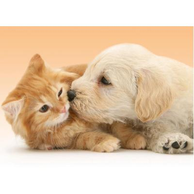 Il Conti in tasca: Cane e gatto? Perfetti coinquilini