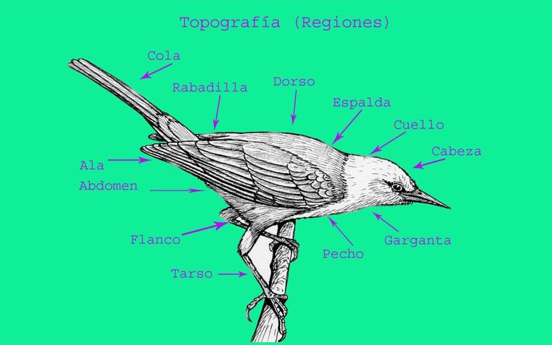 Aves de La Floresta: Identificación de aves