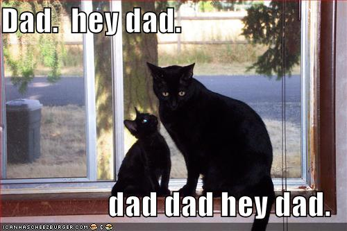Fanpop Funny Cat Pictures : Funny Cute Kitteh Pics Black Cat Funny Cat Pictures