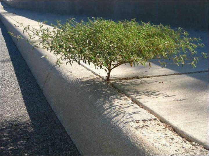 Tumbuhan yang tumbuh di sela-sela jalan