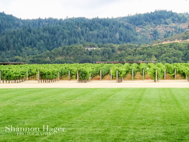 Shannon Hager Photography, Napa, Vineyards
