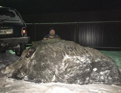 Ρώσος κυνηγός έπιασε το θήραμα της ζωής του πετυχαίνοντας κάπρο 500 κιλών