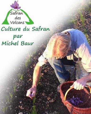 http://lejournaldeleco.fr/le-safran-des-volcans-un-produit-labellise-bio-de-qualite-et-dexception/