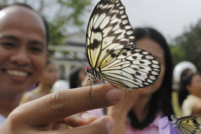 butterfly release