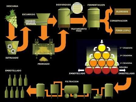 El Vino y sus propiedades antioxidantes