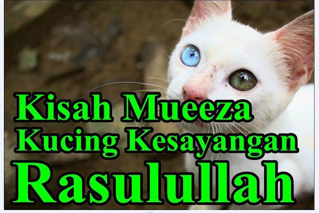 Bagaimana Rasulullah Saw Menyayangi Kucing? Ini Kisahnya!