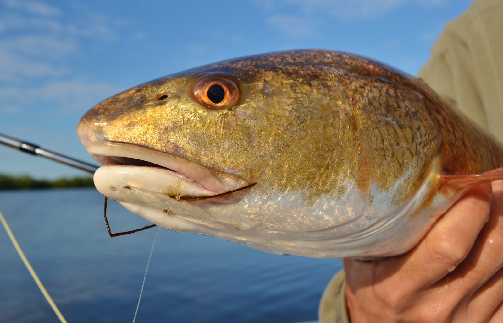 The pine island angler pine island fishing report chilly for Pine island fishing charters