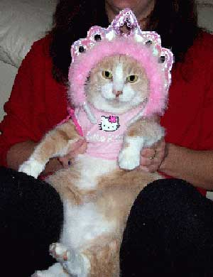 Pet cat wearing Hello Kitty princess costume