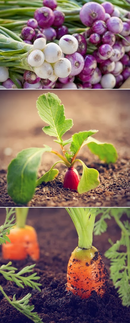 Easy vegetables to grow from seeds alternative green world for What vegetables to grow