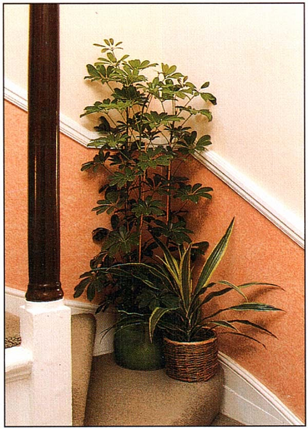 На лестнице растения всегда следует размещать с осторожностью; но если имеется место, ках на этом повороте лестницы, они преобразят безликий уголок дома