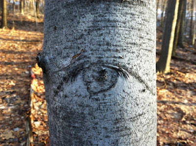 Tree Bark that Looks like an Eye