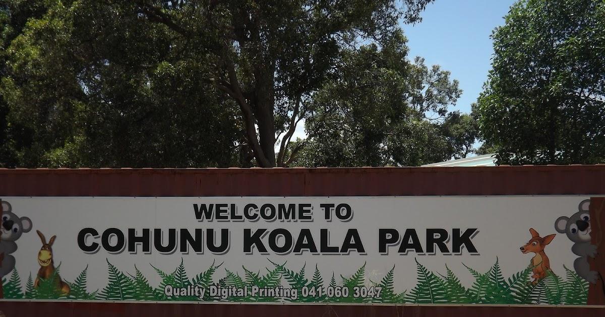 simply sue 39 s simple diary cohunu koala park. Black Bedroom Furniture Sets. Home Design Ideas
