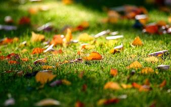 #4 Fall Leaves Wallpaper