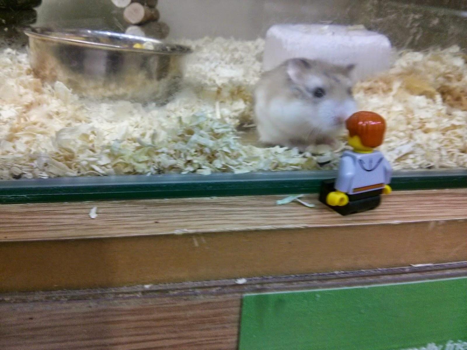 Hamster sniffing to Kyle Emmett