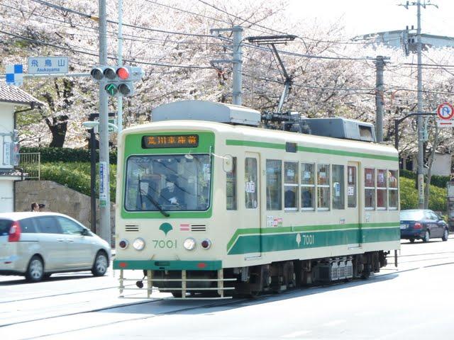 飛鳥山公園の桜と都電~最後の幕式8500形8501