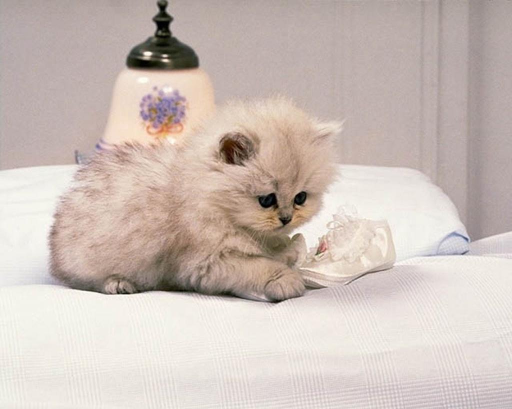 cute kitten wallpaper kittens - photo #35