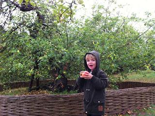 Issac Newtons Tree