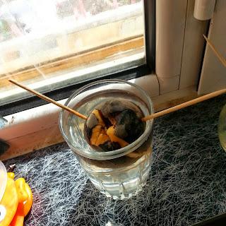 πως να φυτρώσει το αβοκάντο