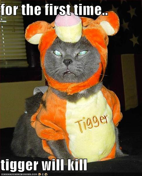Funny Image Collection: Cat Halloween Funny Pics with Funny Captions!