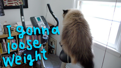 exercise-bike-cat01