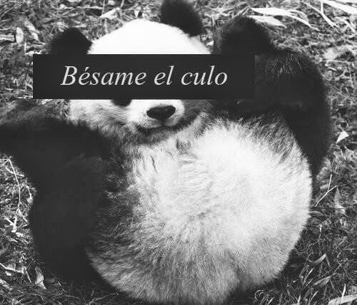 I´m panda.