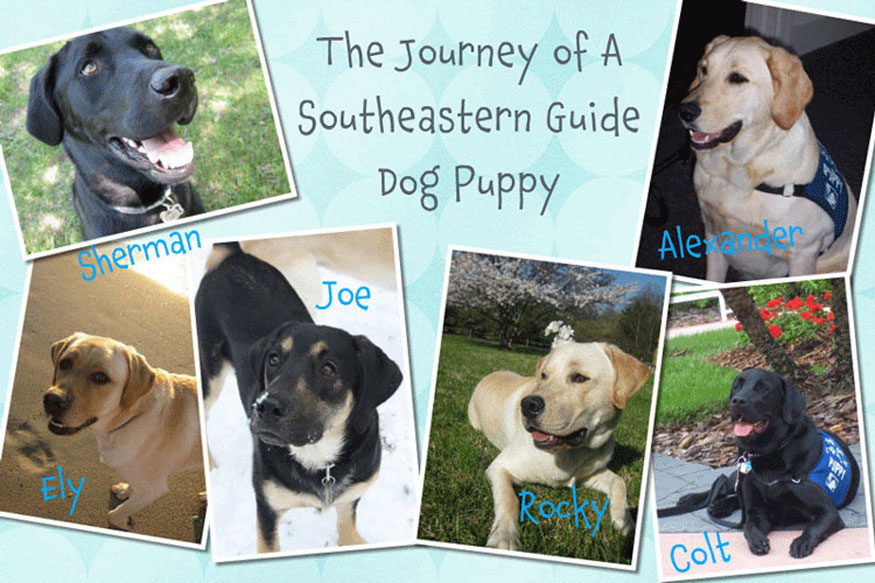 The Journey of a Southeastern Guide Dog Puppy