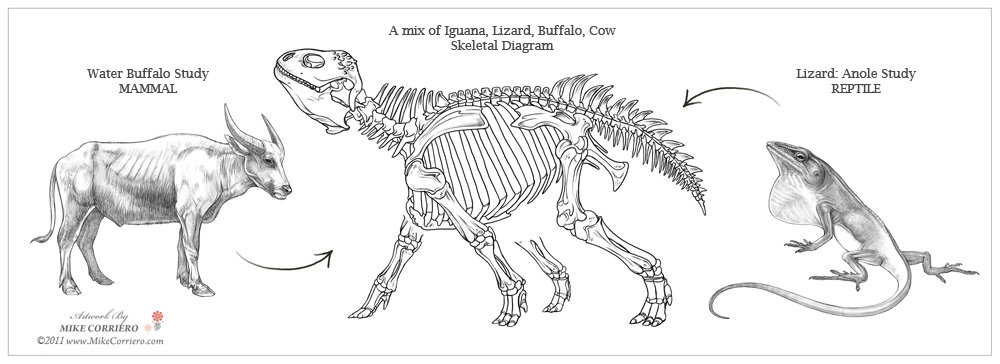ill touch more upon the animal kingdom on mixing and matching various animal anatomy and how - Animal Anatomy Coloring Book