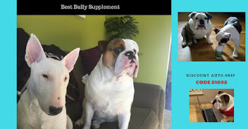 Want the BEST for your Bulldog?  Hit photo