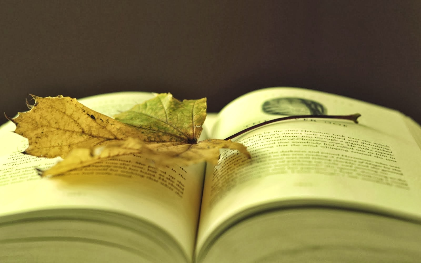 """""""We read to know that we are not alone.""""  ― William Nicholson"""