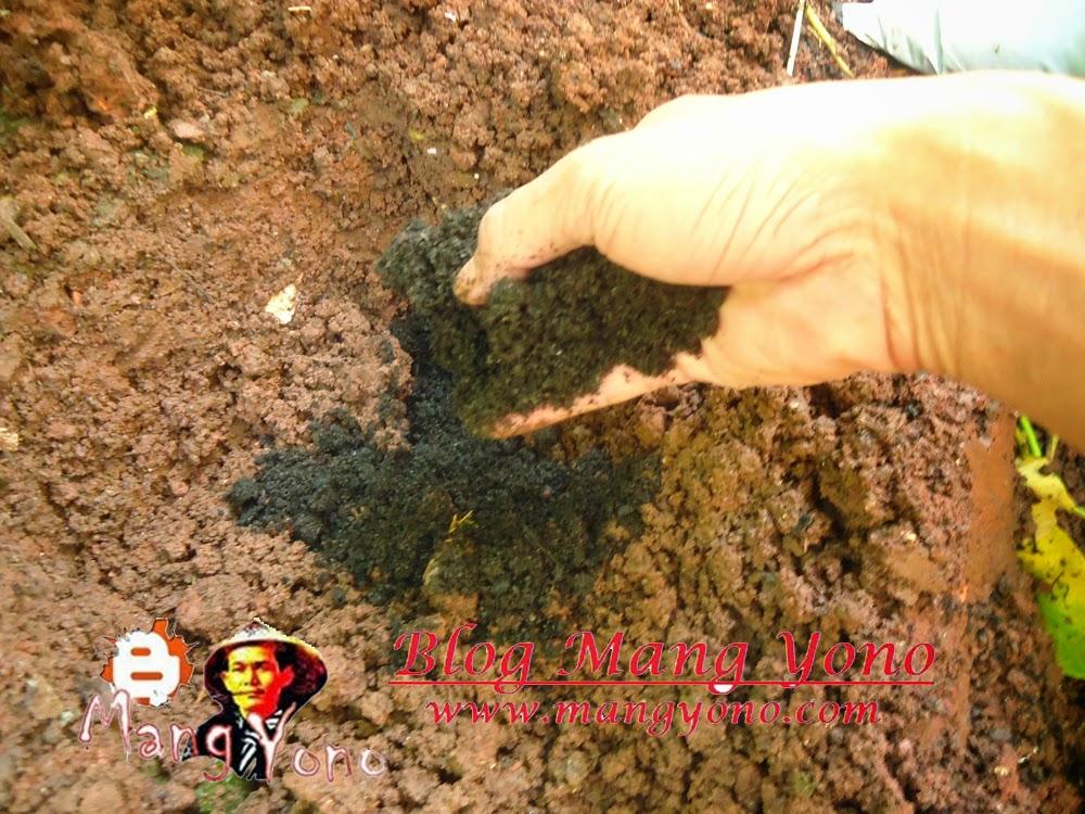 Pengisian pupuk kompos atau arang sekam padi.