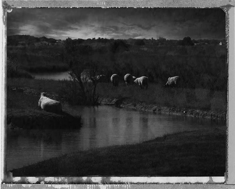 Oleron Mouton et marais