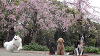 http://border-polly.blogspot.jp/2015/04/blog-post_6.html