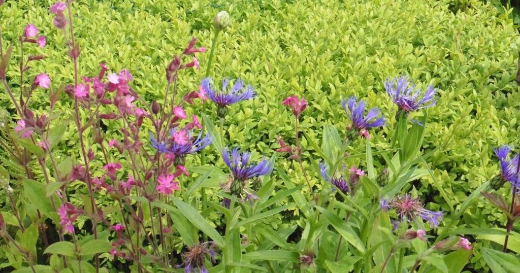 In m jn tuin tuinfoto 39 s juni 2015 - Bijzonder tuinfoto ...
