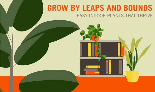 Grow By Leaps and Bounds Easy Indoor Plants That Thrive ...
