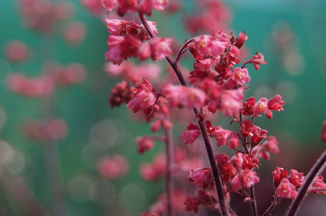 Pink flower petals, bokeh