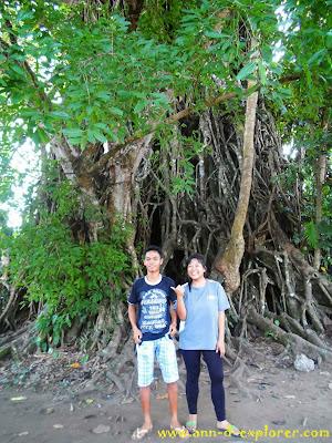 millennium tree