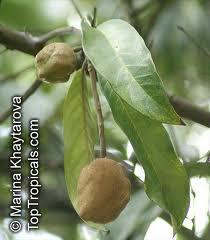 Kokoleceran..., Maskot Provinsi Banten...!!! | indonesiatanahairku-indonesia.blogspot.com/