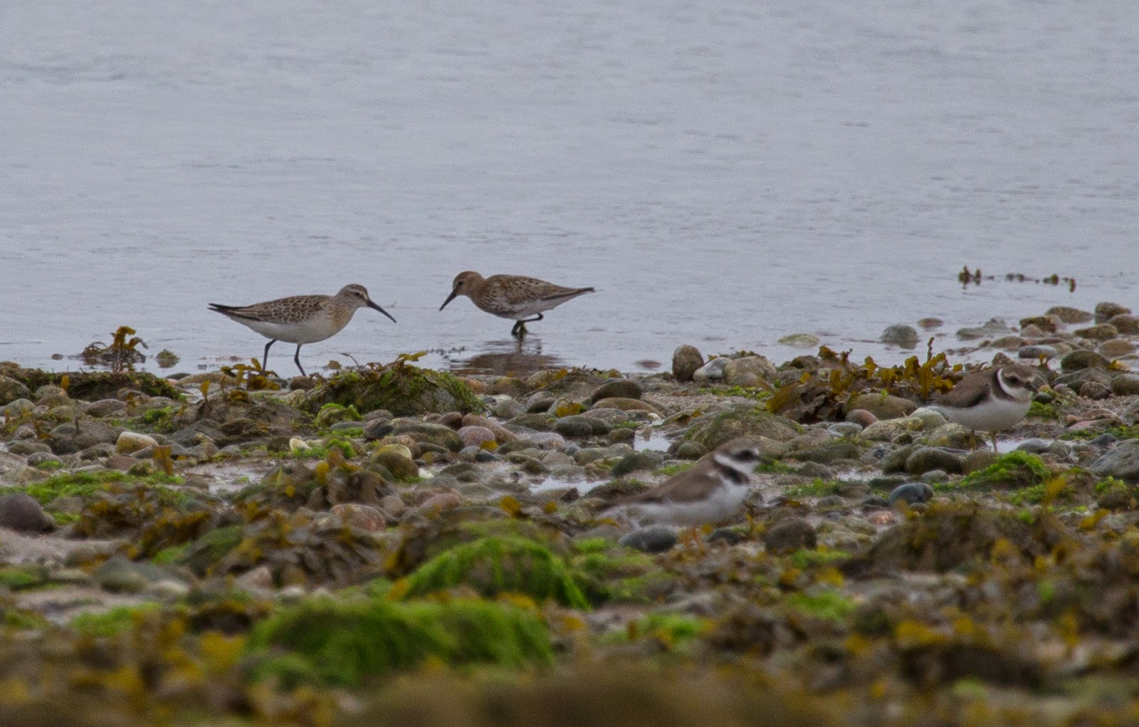 The Deskbound Birder Isles Of Scilly 24th 29th September 2014
