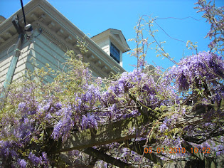 Lavender for