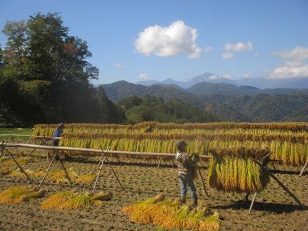よろこぶつち農園のブログ