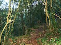 Seguint el sender sota la Serra Madrona