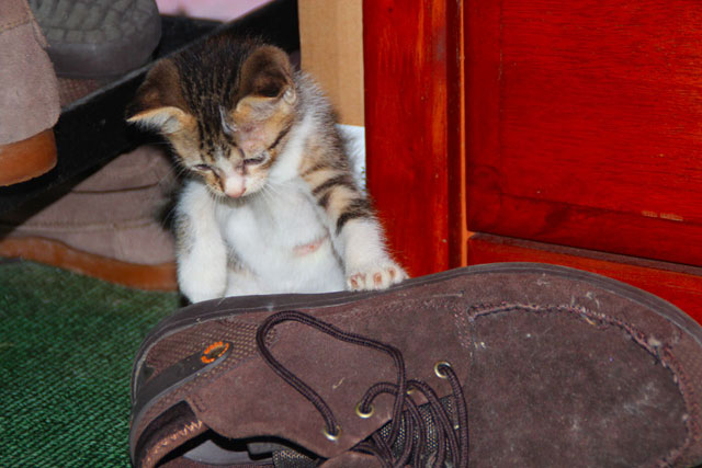ragam si kucing