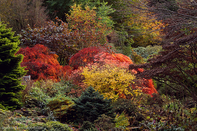 autumnal view of Branklyn Garden