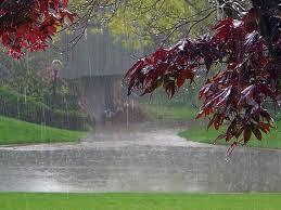 24/11 - As riquezas que a chuva traz