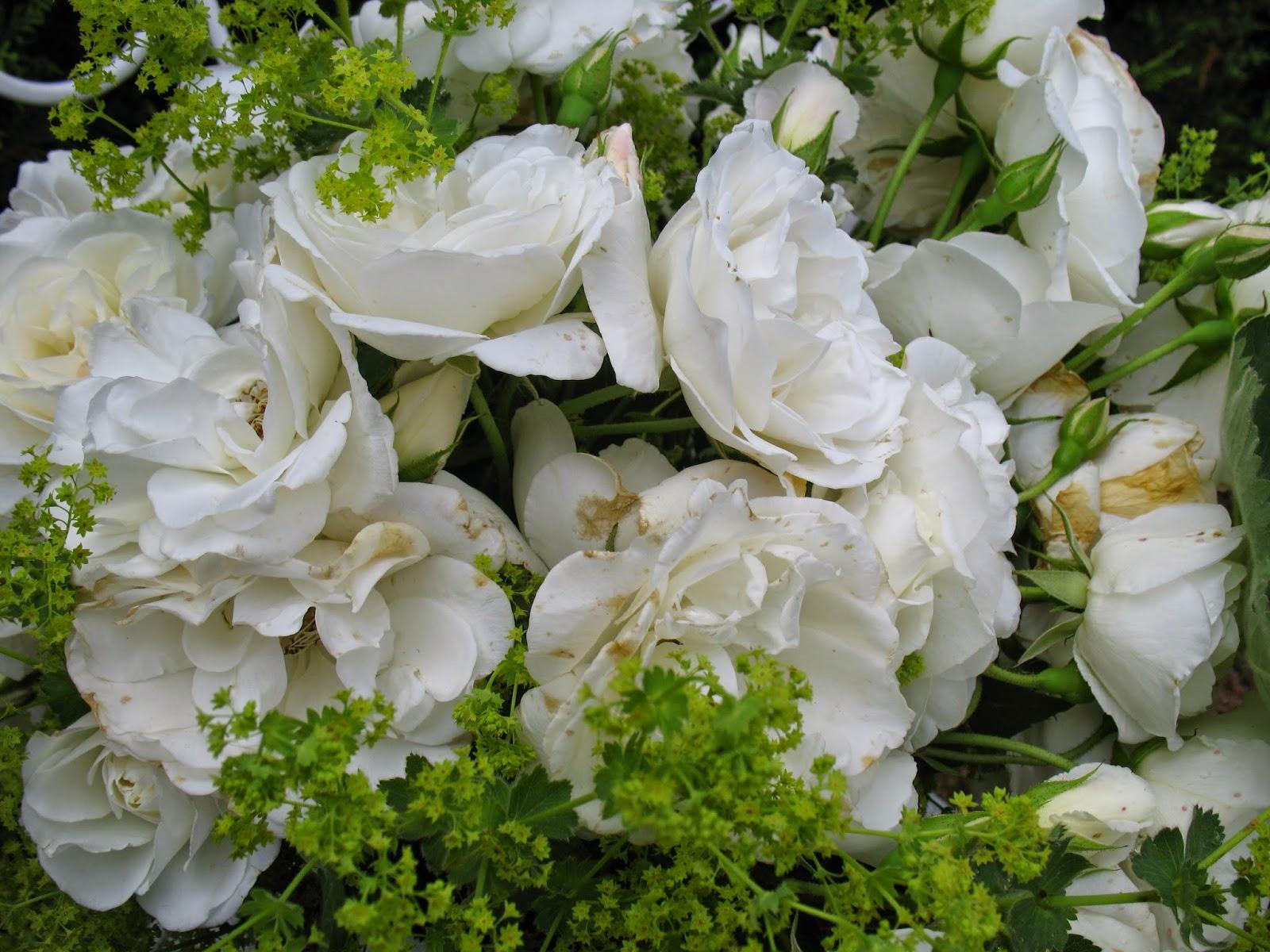 Roses du jardin ch neland for Recherche jardinier 77