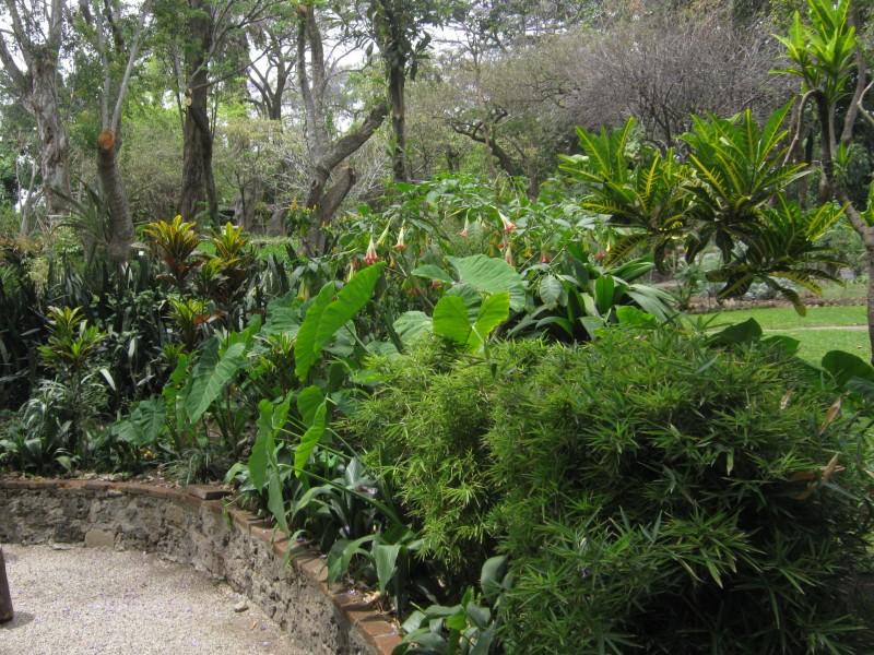 El cuexcomate salida de campo 2012 plantas medicinales for Jardin botanico medicinal